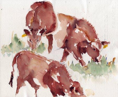 donkeys0001.jpg