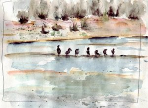 loirebirds