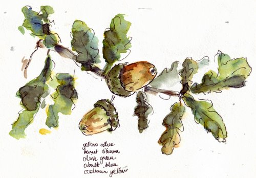 branch with acorns