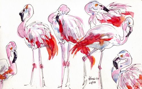 hawaii flamingoes