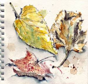 3 ochre fall leaves