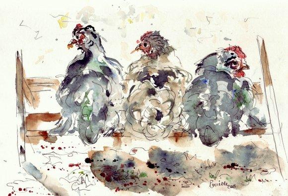 poulets aquarelles