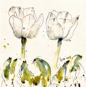 tulipes -white 4404x4460