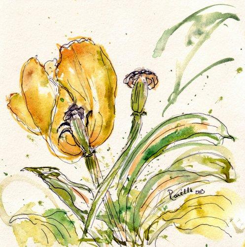tulipes- yellow  4424x4451