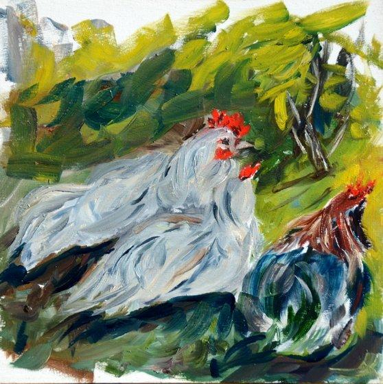 three chickens 25-09-2013 17-06-57 2964x2979