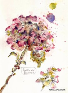 autumn hydrangea 1