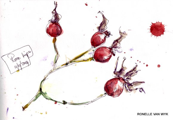 Ronelle's art-sketching November reds -001