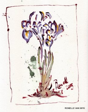 iris reticulata-001