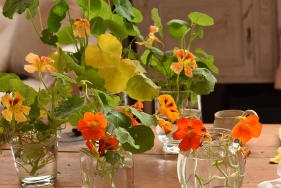 nasturtiums-in-yellow-and-red-002